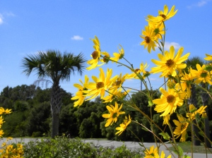 Flowers at the Edisto  Beach State Park